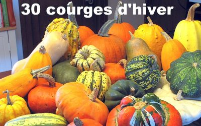 Courges d'hiver