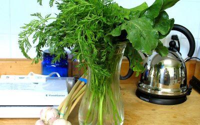 Comment conserver les verdures et fanes de légumes