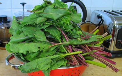 Rotation des verdures-feuillages alcalinisants/anti-acidité
