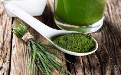 Le jus d'herbe de blé est-il bon pour nous?