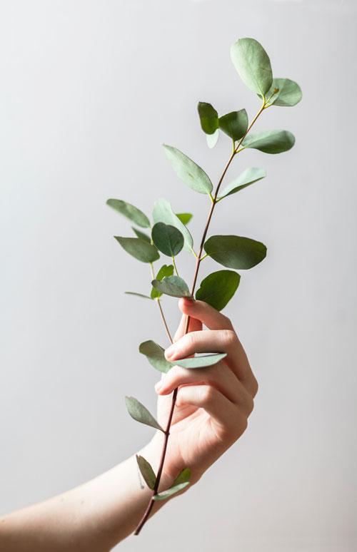 Santé naturelle - HEnergie Santé